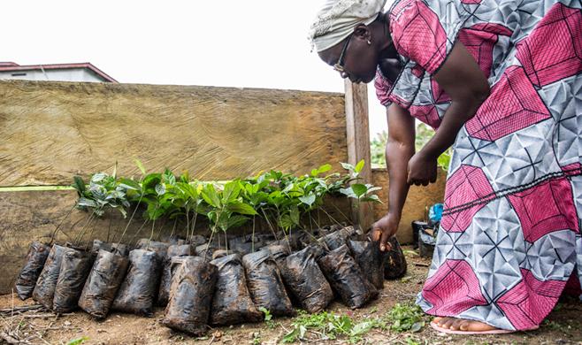 African Ebony and Sustainability