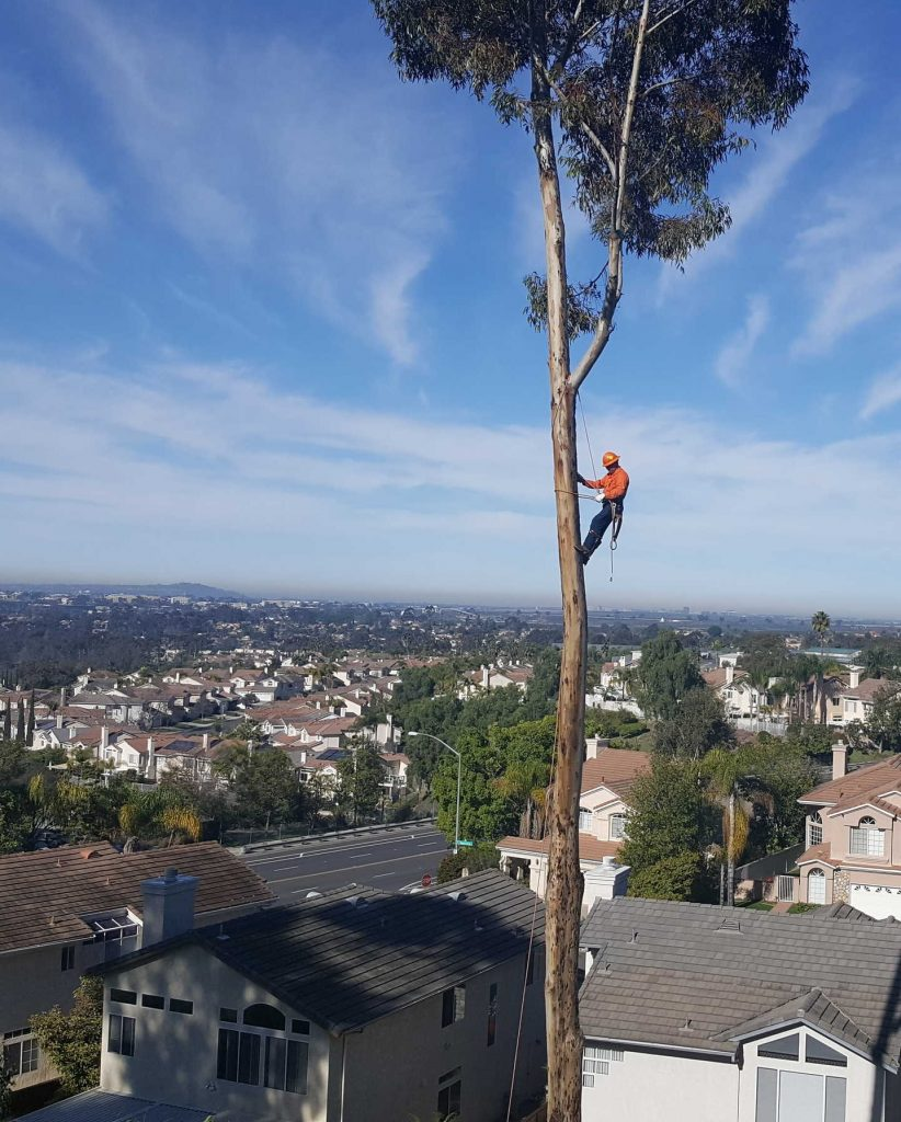 Ever wonder what happens to trees when they need to be removed?